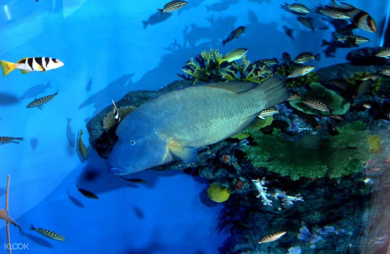 noboribetsu marine park nixe